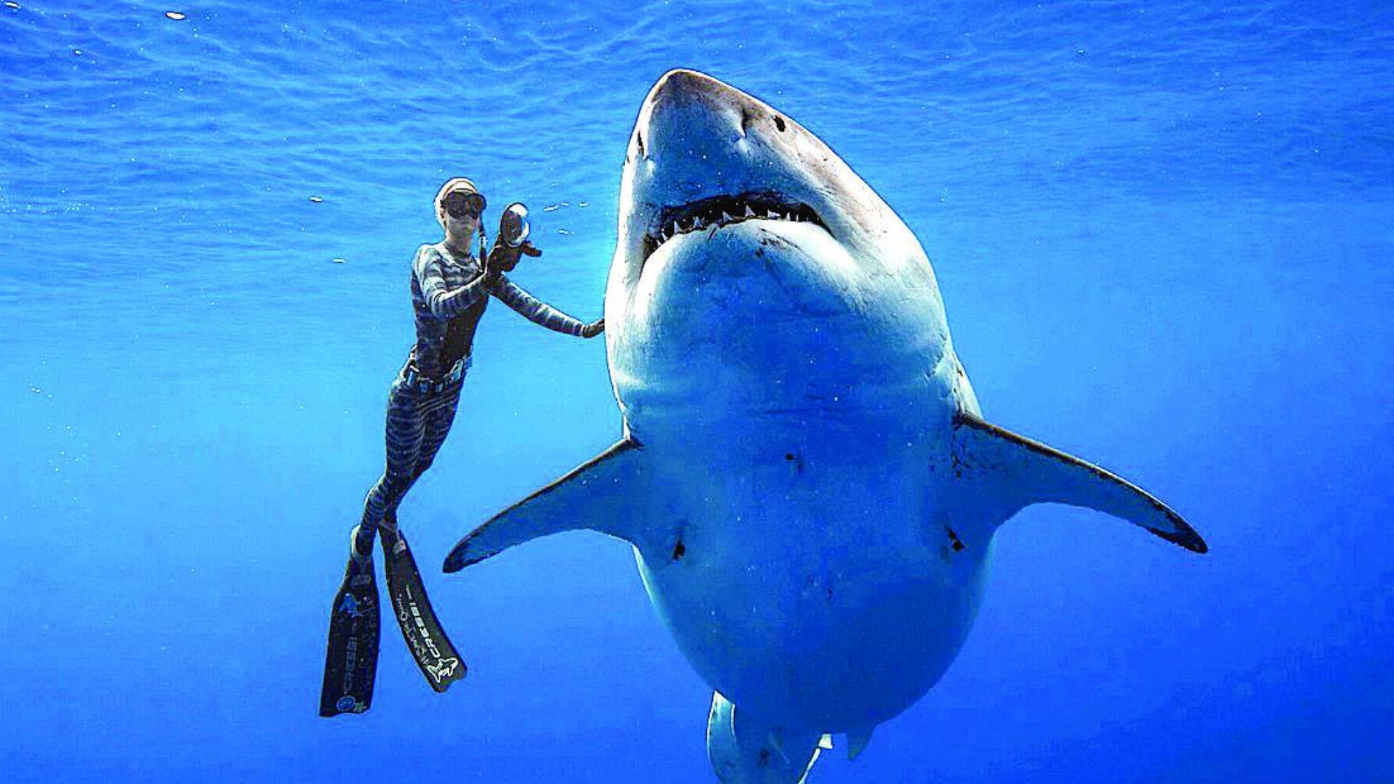 Deep Blue Tiburón Buzos