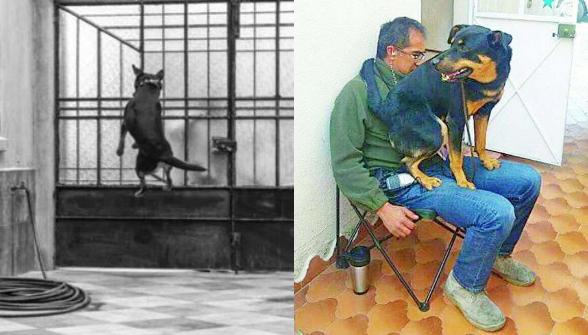 perro Roma película El Borras