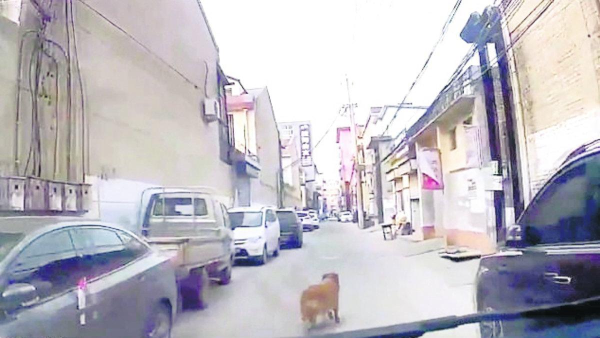 perro ambulancia guia dueño desmayado china