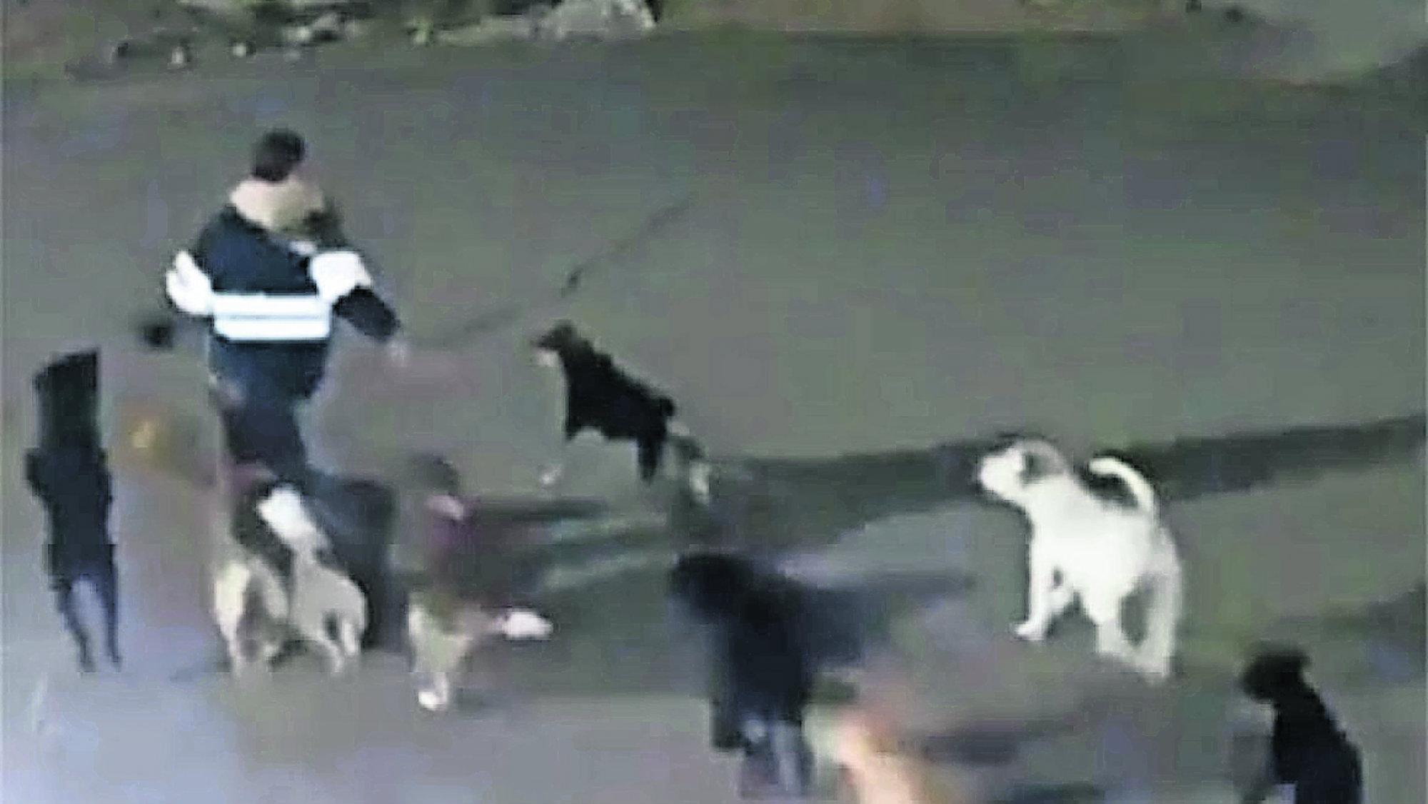 Capturan Perros Jauría Asesina Tecámac