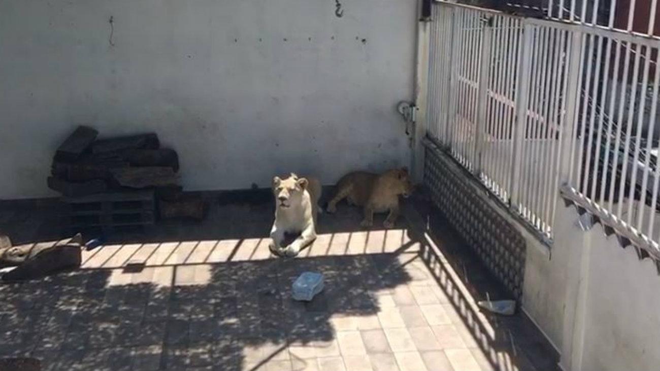 Iztacalco leones blancos ciudad de mexico