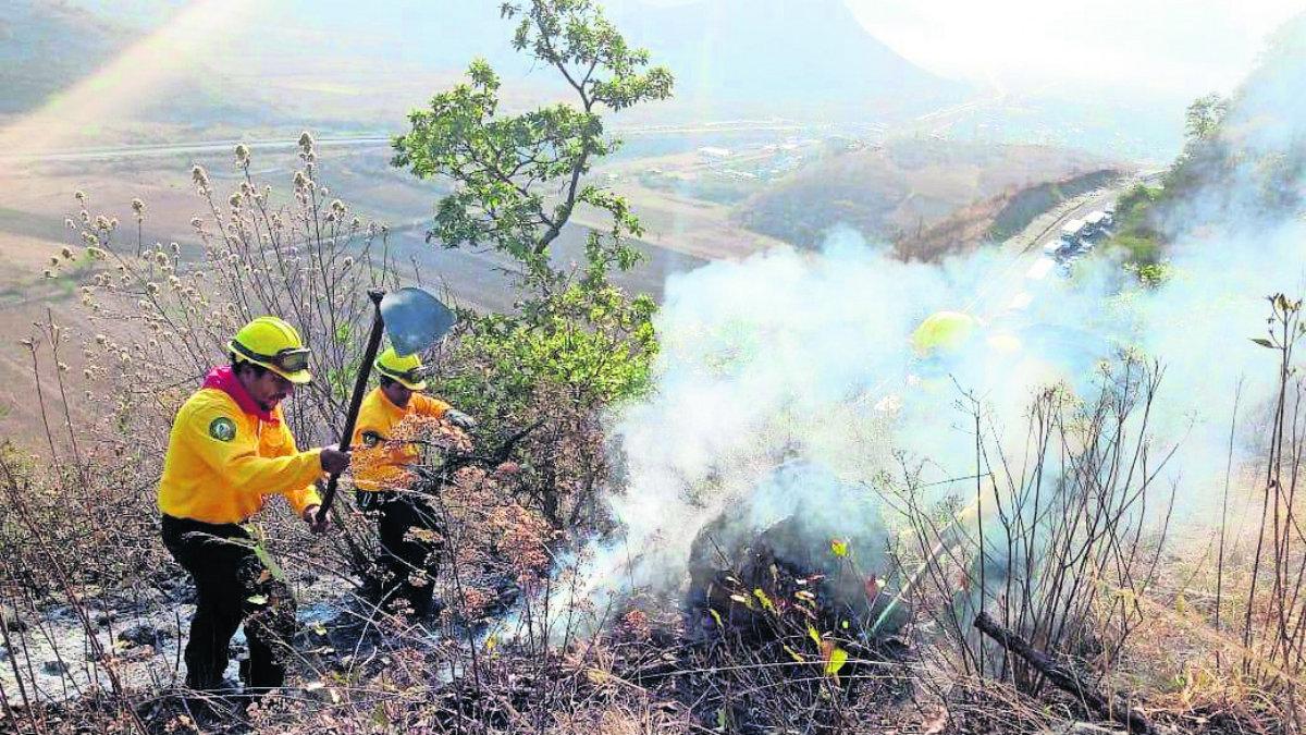 fuego consume zona boscosa