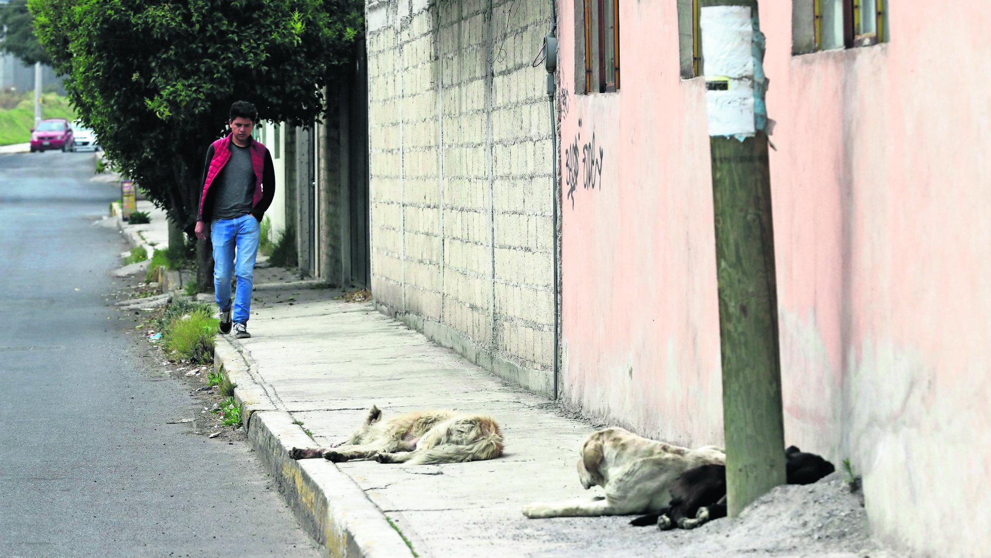 Campaña de esterilización Perros y gatos Toluca Edoméx
