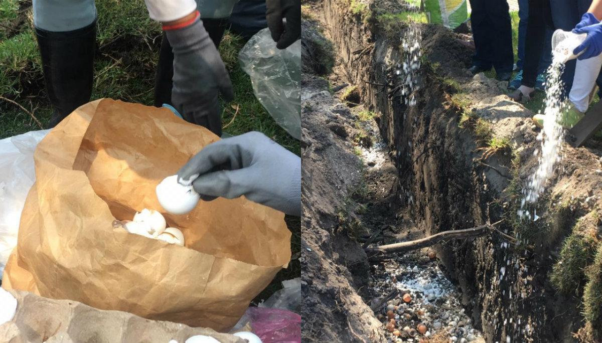 Vecinos del río Lerma recolectan huevos para frenar agua contaminada en Edoméx