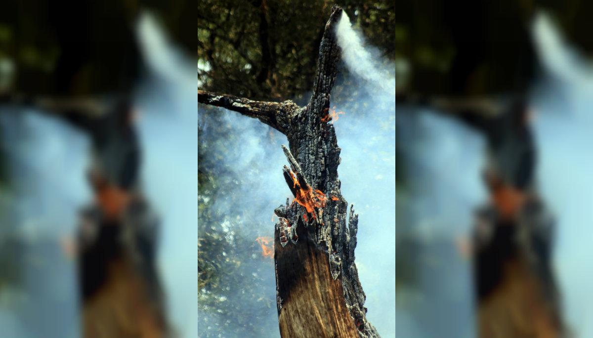 Toluca incendios forestales