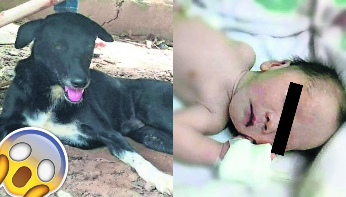 Perro rescata a bebé Abandono infantil Tailandia