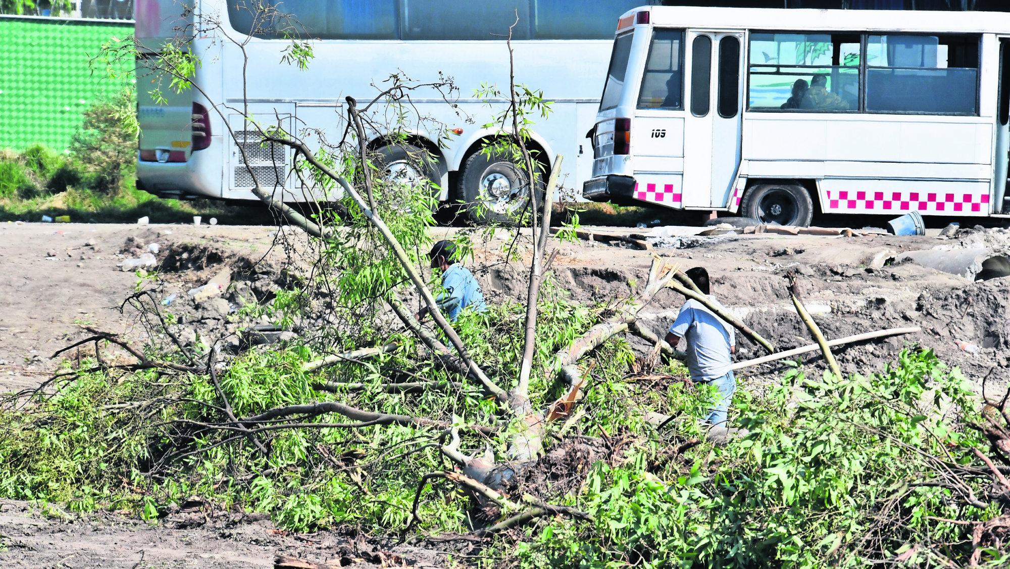Contaminación del aire Talan árboles Centro comercial Edomex Toluca