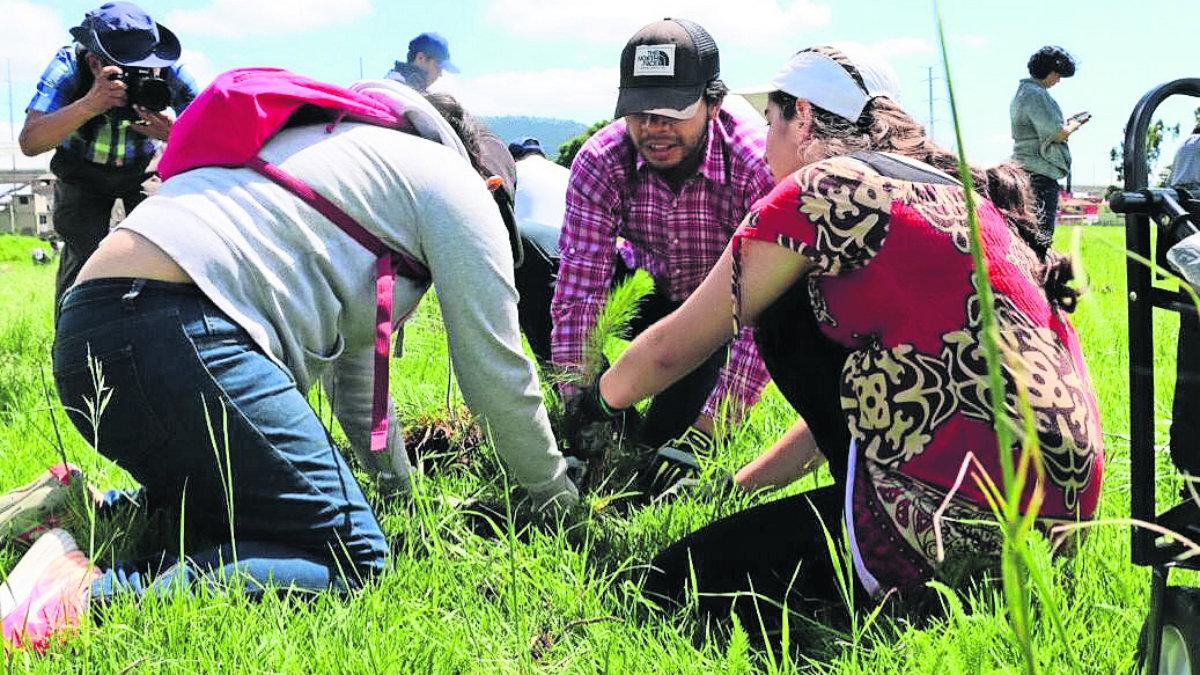 campaña reforestación árboles toluca