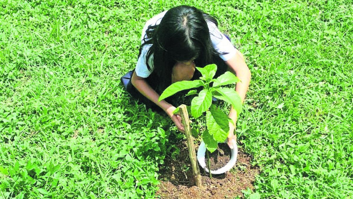 estudiantes plantarán árboles para graduarse filipinas manila