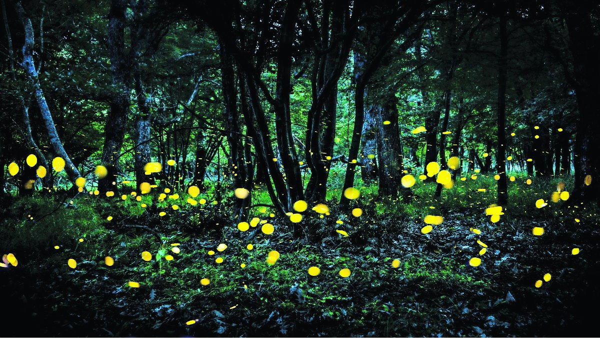 inicia ruta de las luciérnagas luces volcanes amecameca temporada