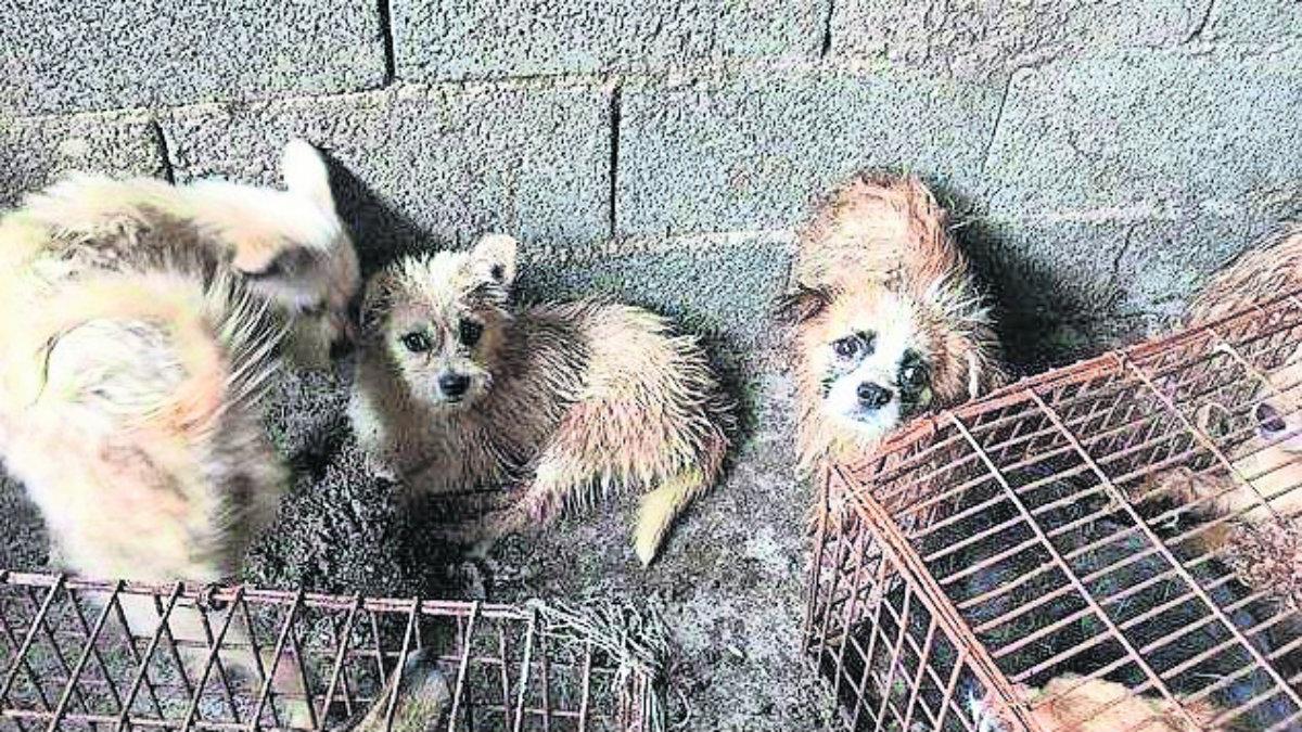 Perros libran ser cocinados China