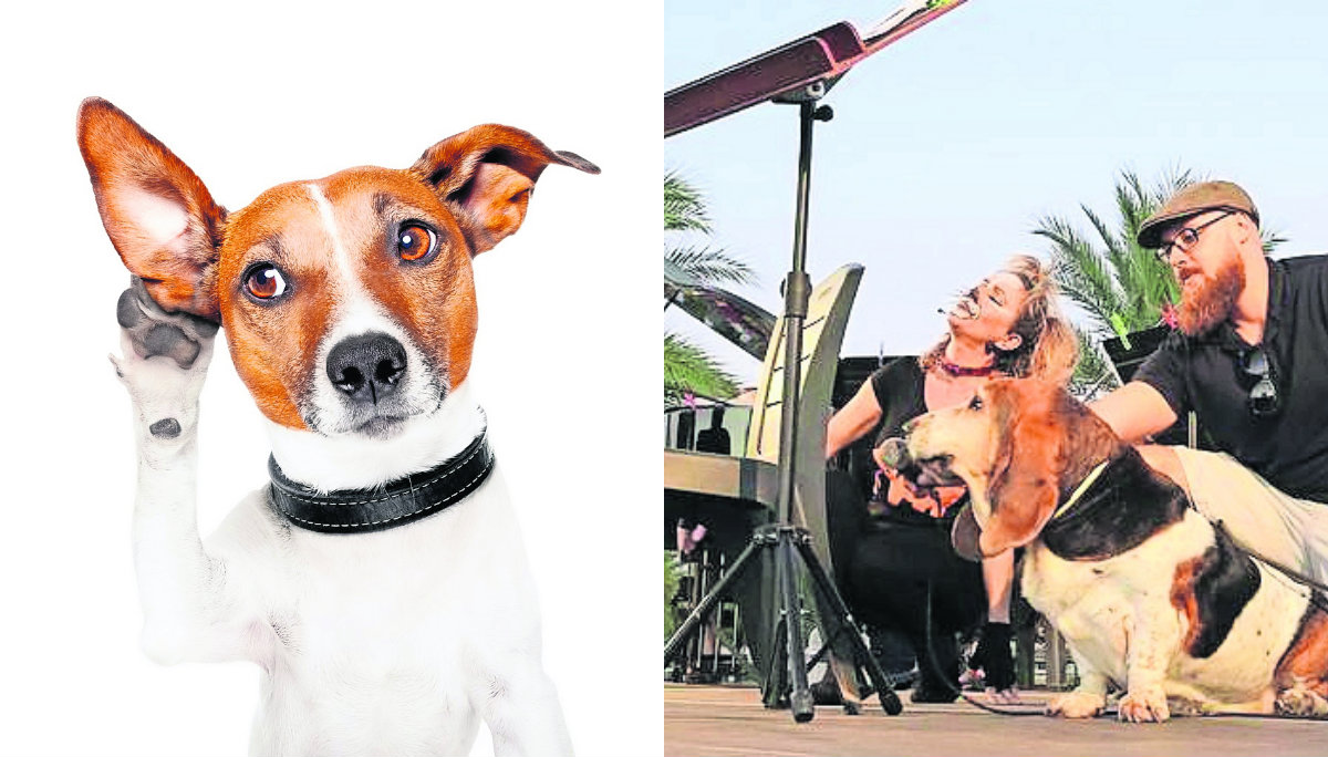 centro canino Miraflores organizará concierto