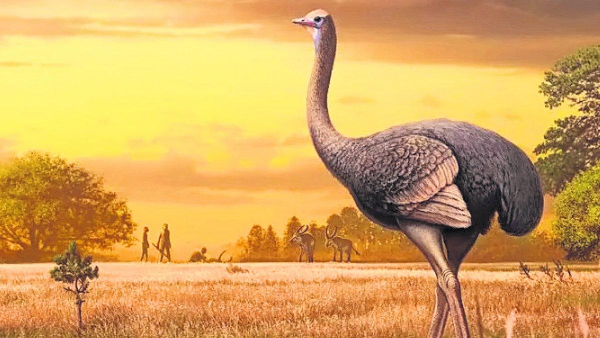 Hallan fósil ave gigante 450 kilos