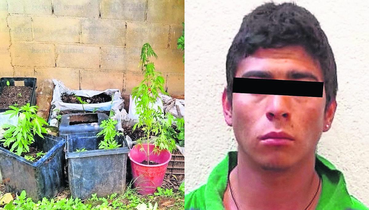 detienen sorprenden joven chavo regando jardín marihuana plantas macetas droga