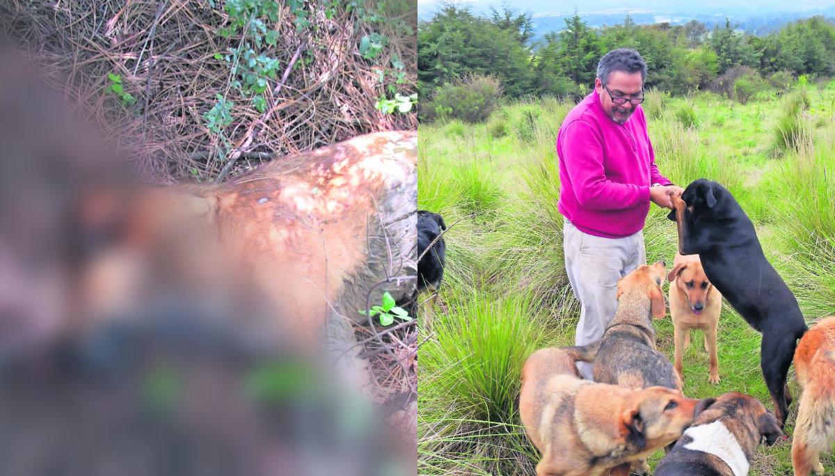 Cebos envenenados acaban perros