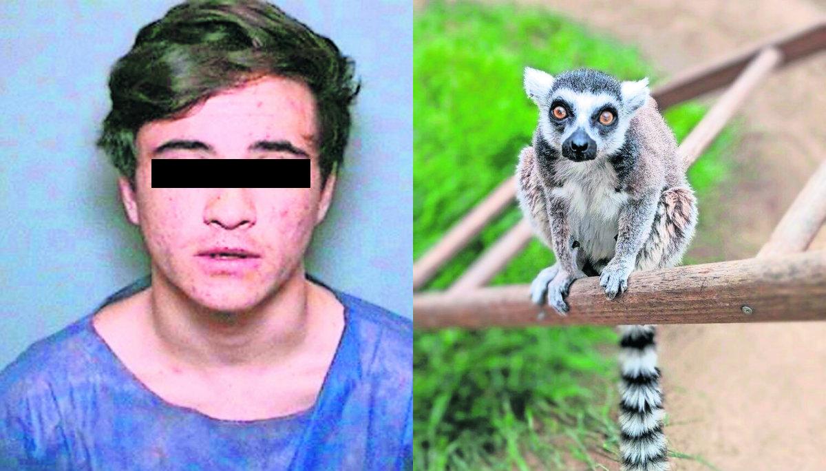 joven confiesa robó lémur adoptarlo mascota zoológico se arrepiente california estados unidos