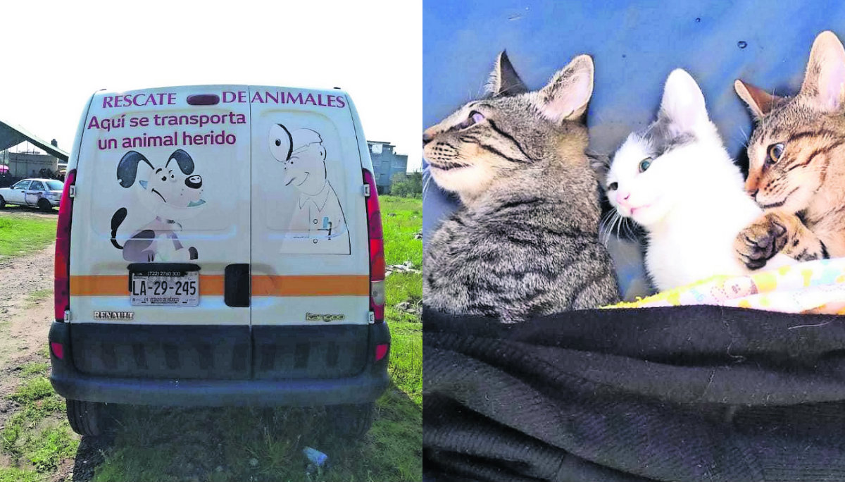 mascotas rescate ambulancias primeros auxilios gatos perros atención médica adopción esterilización centro de control animal toluca