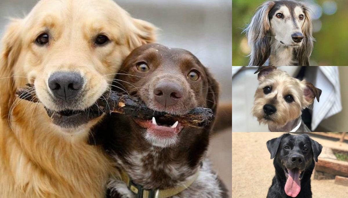 día mundial del perro 21 de julio por qué se festeja