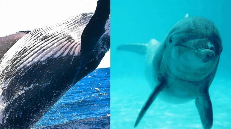 dia mundial de las ballenas y los delfines