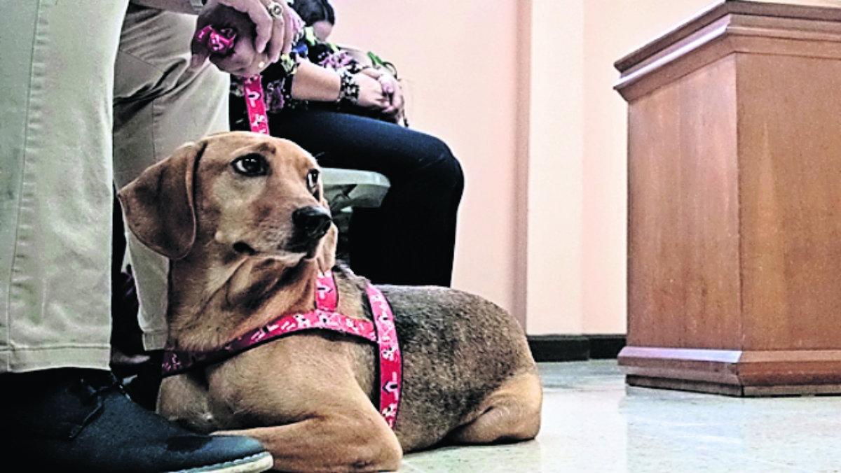 perro asiste juicio en contra de su exdueña maltrato animal desnutrido pulgas campeón denuncia costa rica