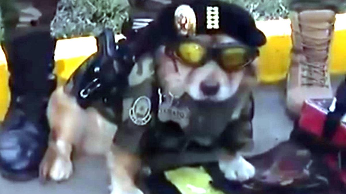 Chato el perrito policía que se hizo viral por desfilar con su propia pistola