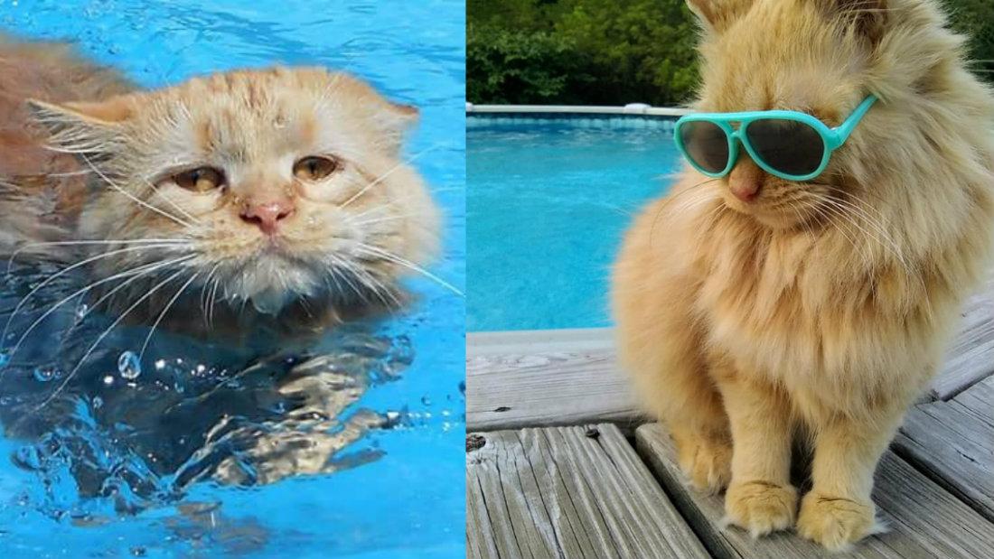 gato nadador kitty
