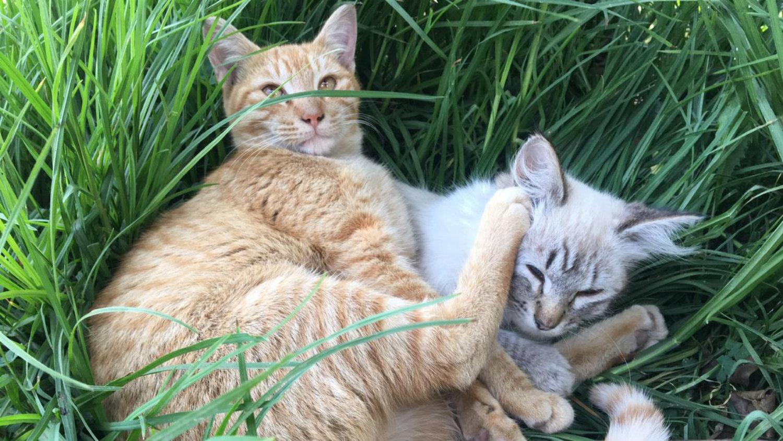 dia mundial del gato