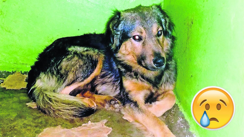 Rudy envenenamiento Centro de Control y Bienestar Animal