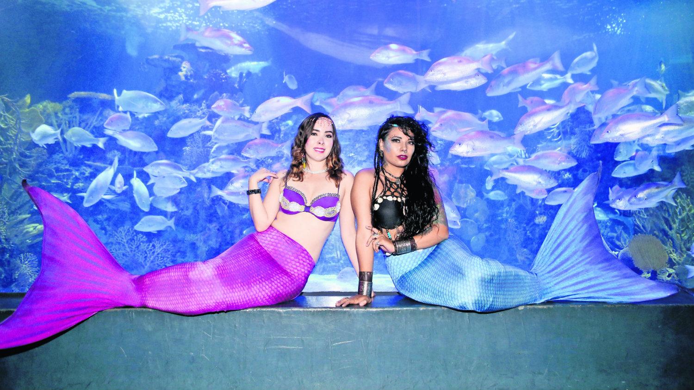 miss mermaid méxico sirenas