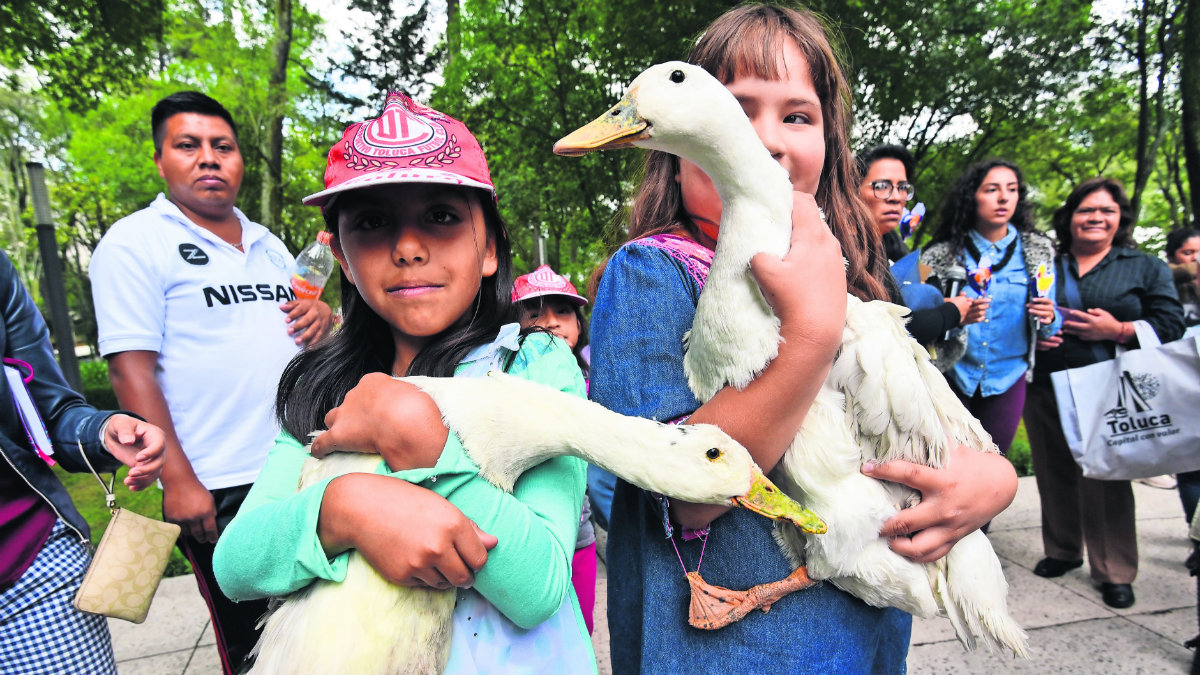 niños apadrinan patos estanque alameda central toluca habrá vigilancia sanciones
