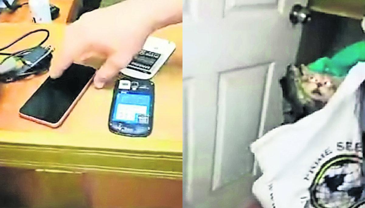 gato traficante ladrón celulares teléfonos delincuente detenido costa rica