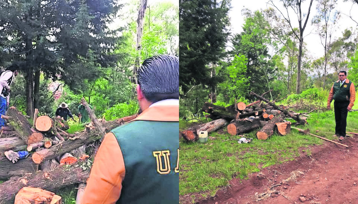 tala árboles Cerro Magueyes comité cuidado