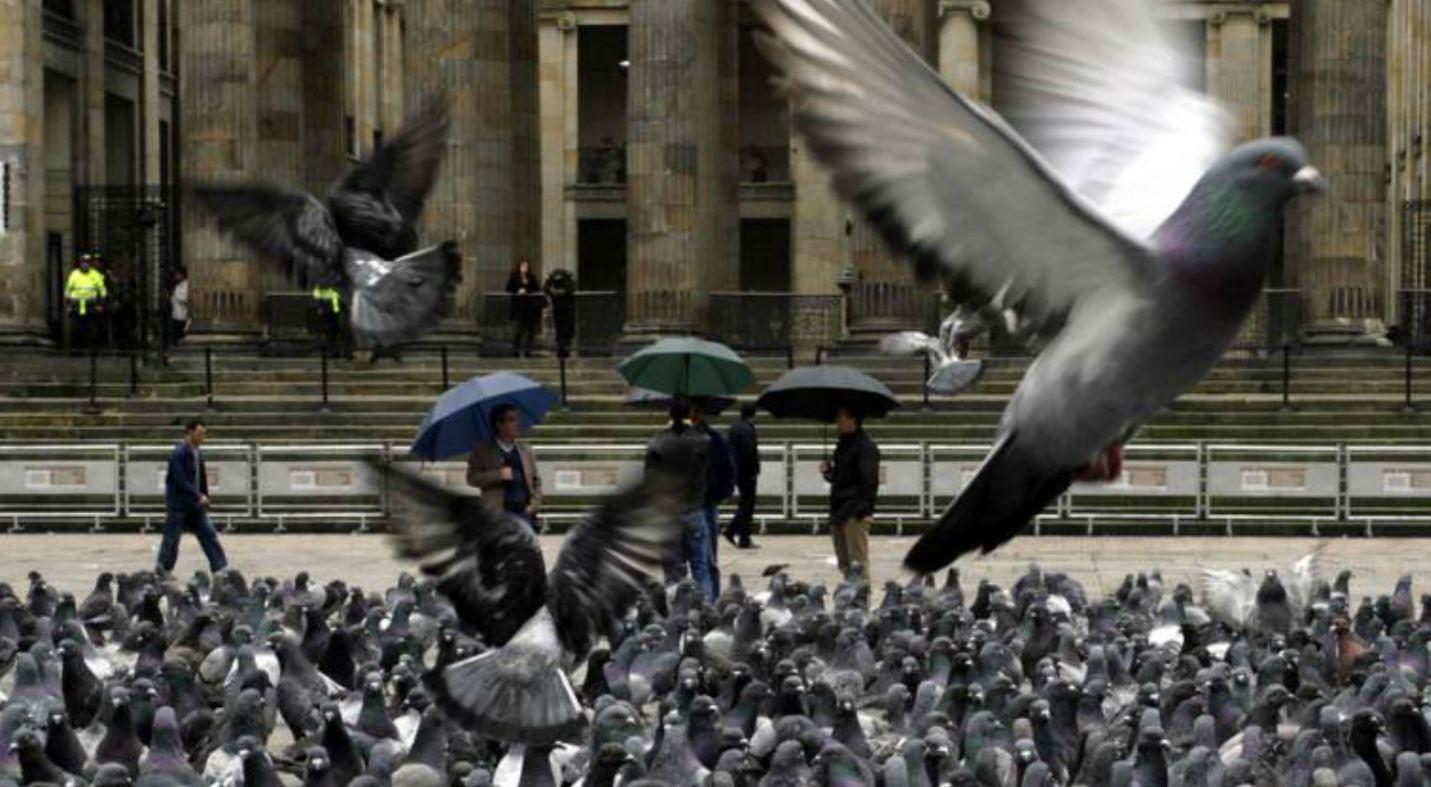 alimento anticonceptivos palomas bruselas belgica europa sobrepoblacion