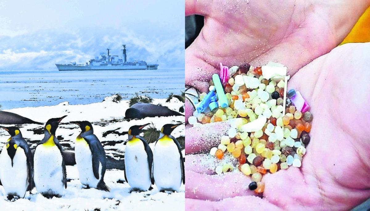 hallan restos plástico microplástico excremento desperdicios fecales pingüinos portugal