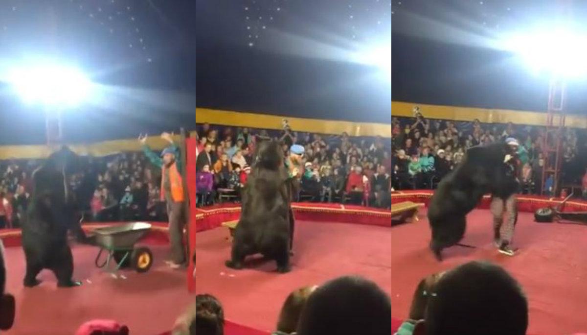 Ataque oso domador circo