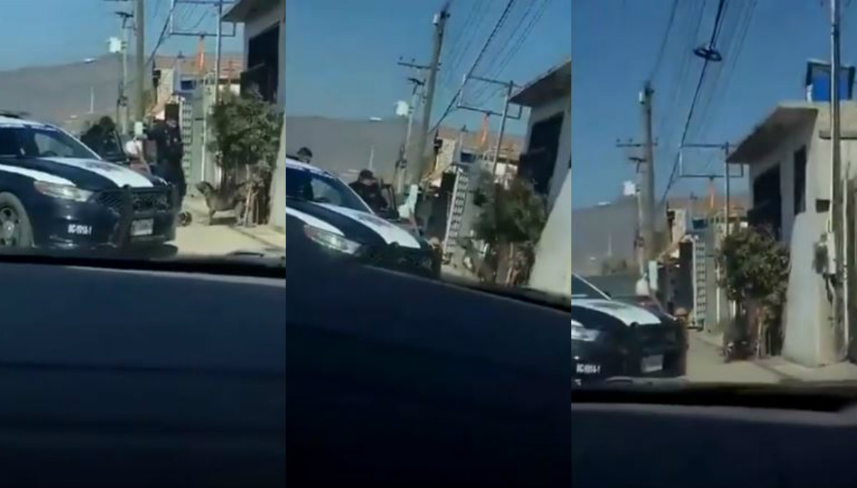 Policías asesinan perro pitbull Tijuana