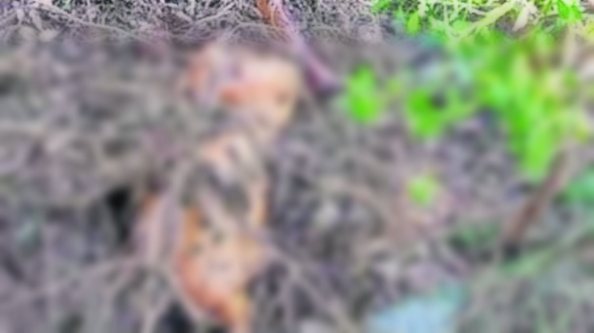 Encuentran pierna y torso en Nicolás Romero; el lunes fue un cráneo