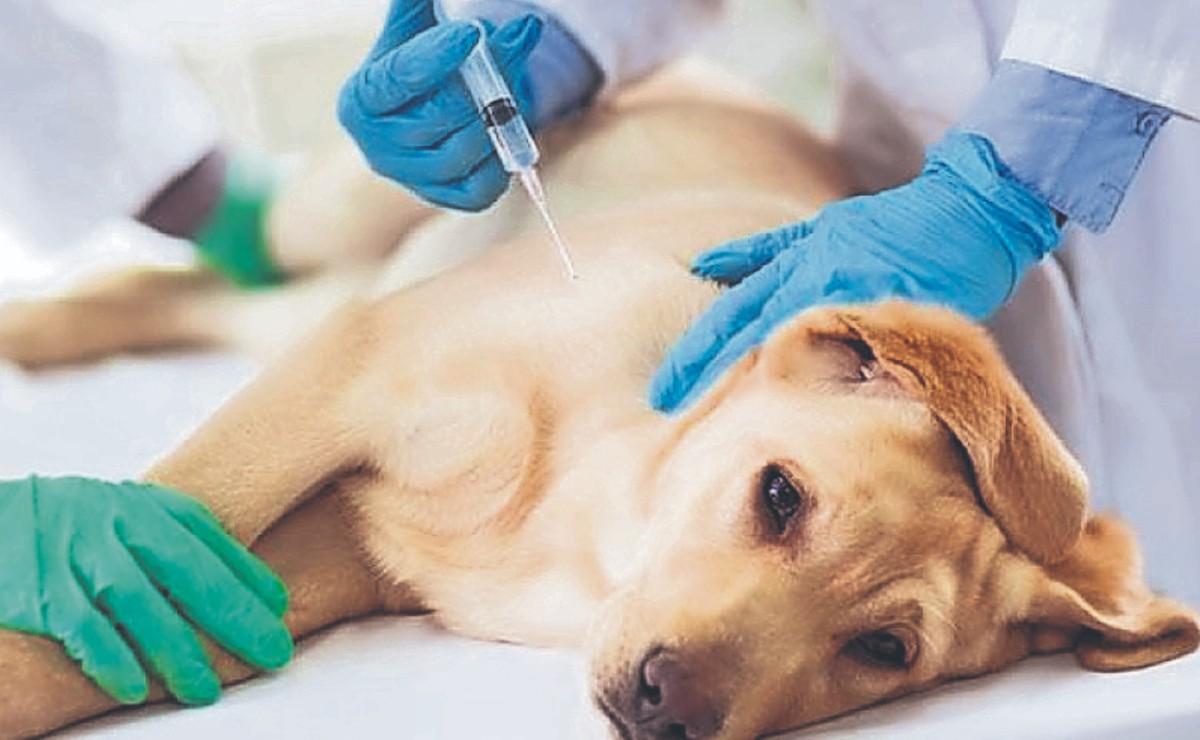 Veterinarios engañan a 100 personas y les aplican vacuna canina, dijeron que era antiCovid