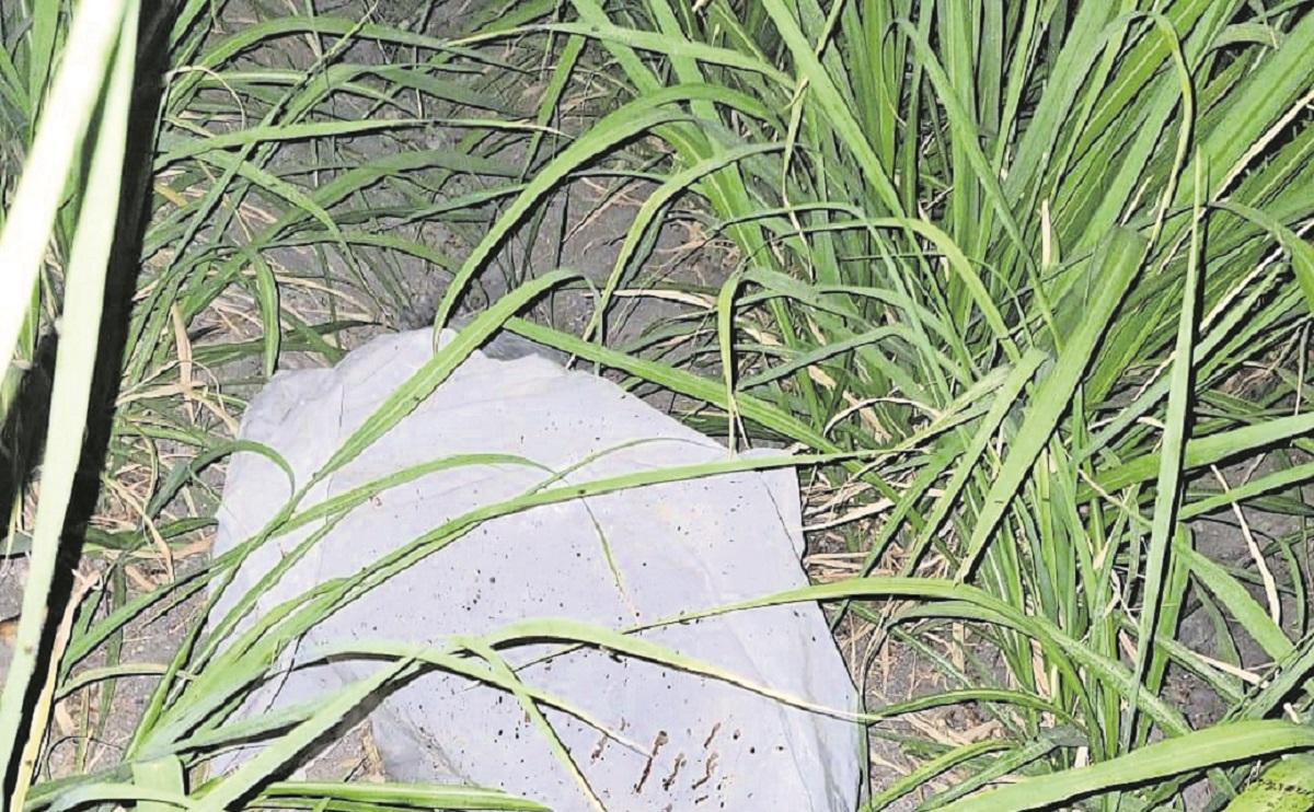 Encuentran cuerpo putrefacto en cañaverales del poblado de Tlatenchi, en Morelos