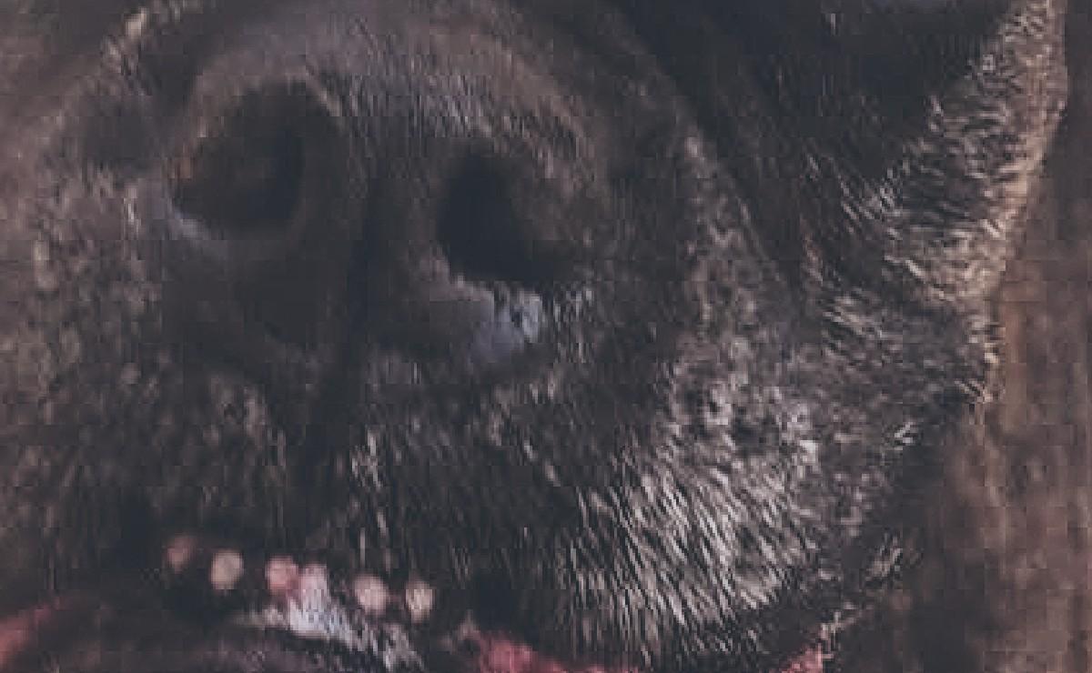 Queda libre sujeto que arrojó ácido a una perrita en Morelos, solo acudirá a firmar