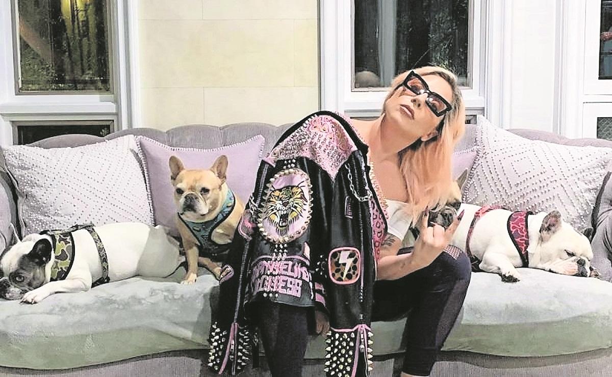 Arrestan a 5 personas relacionadas con el tiroteo y secuestro de los perros de Lady Gaga