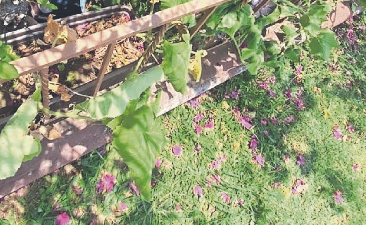 Abuelito muere al caer de las escaleras cuando hacía trabajos de jardinería, en Morelos