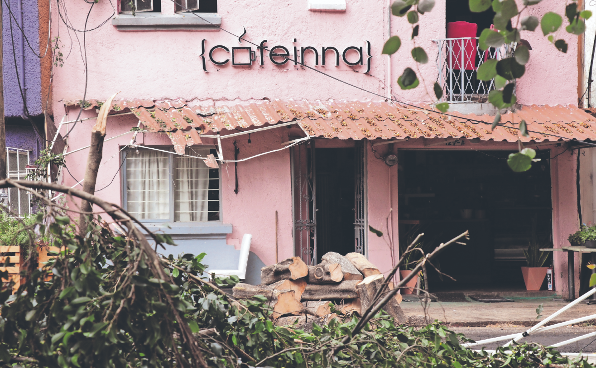 Además de inundaciones, lluvias tiraron árboles y afectaron a negocios en CDMX