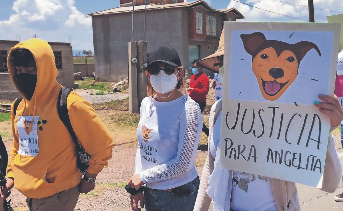 Mexiquenses indignados marchan por Angelita, la perrita que fue colgada hasta la muerte
