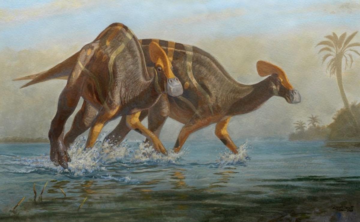 Paleontólogos del INAH y la UNAM identifican nueva especie de dinosaurio, en Coahuila