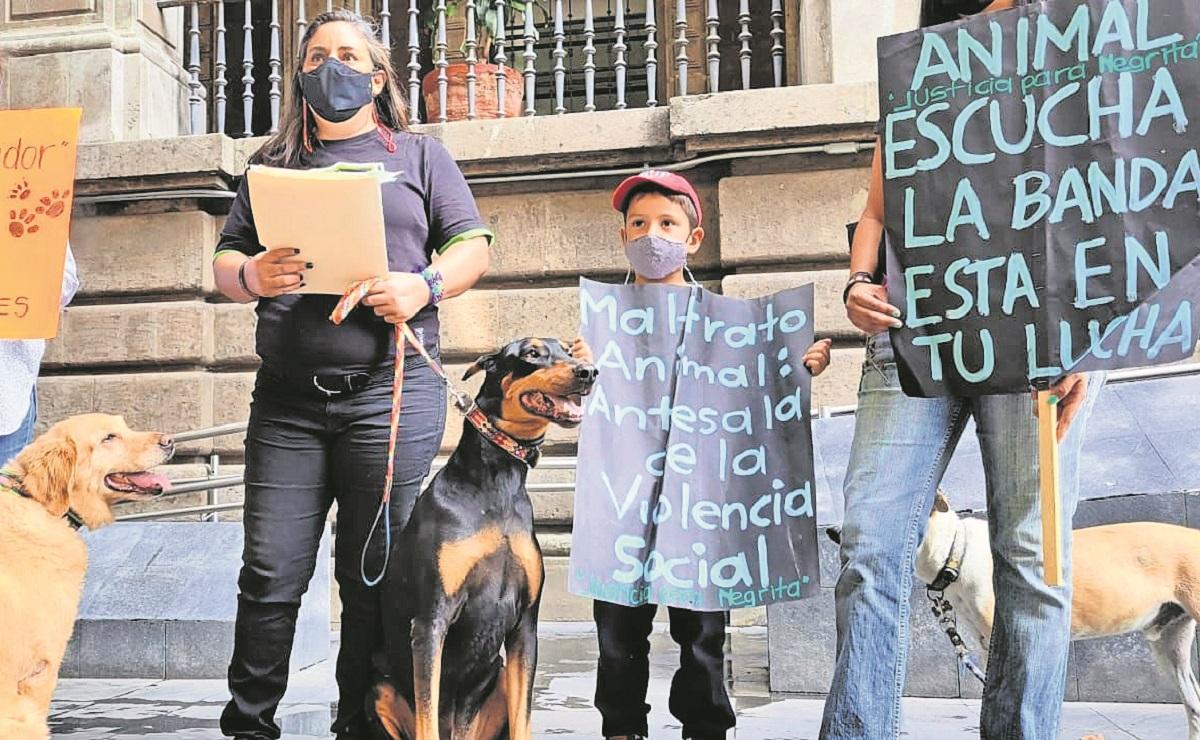 Animalistas piden a diputados a aprobar la ley contra maltratadores de animales en Morelos