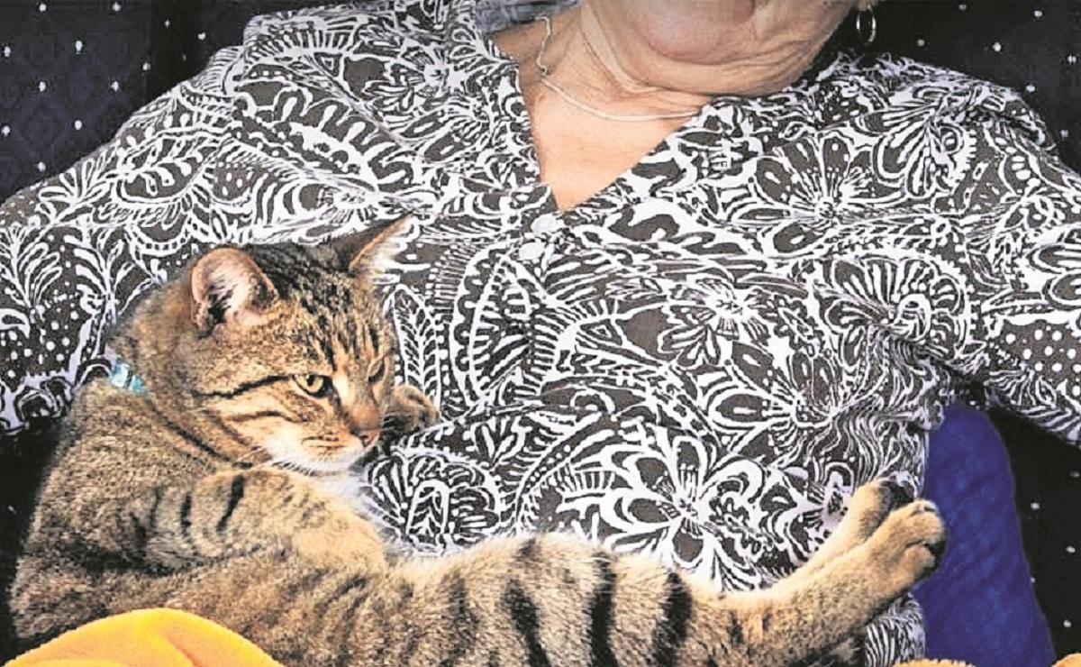 Colombiana muere en España, su cadáver fue devorado por sus gatos
