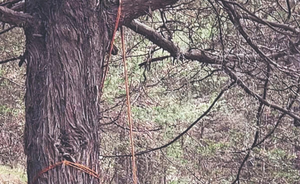 Votantes que regresaban de las casillas hallan a un hombre colgado de árbol, en Toluca