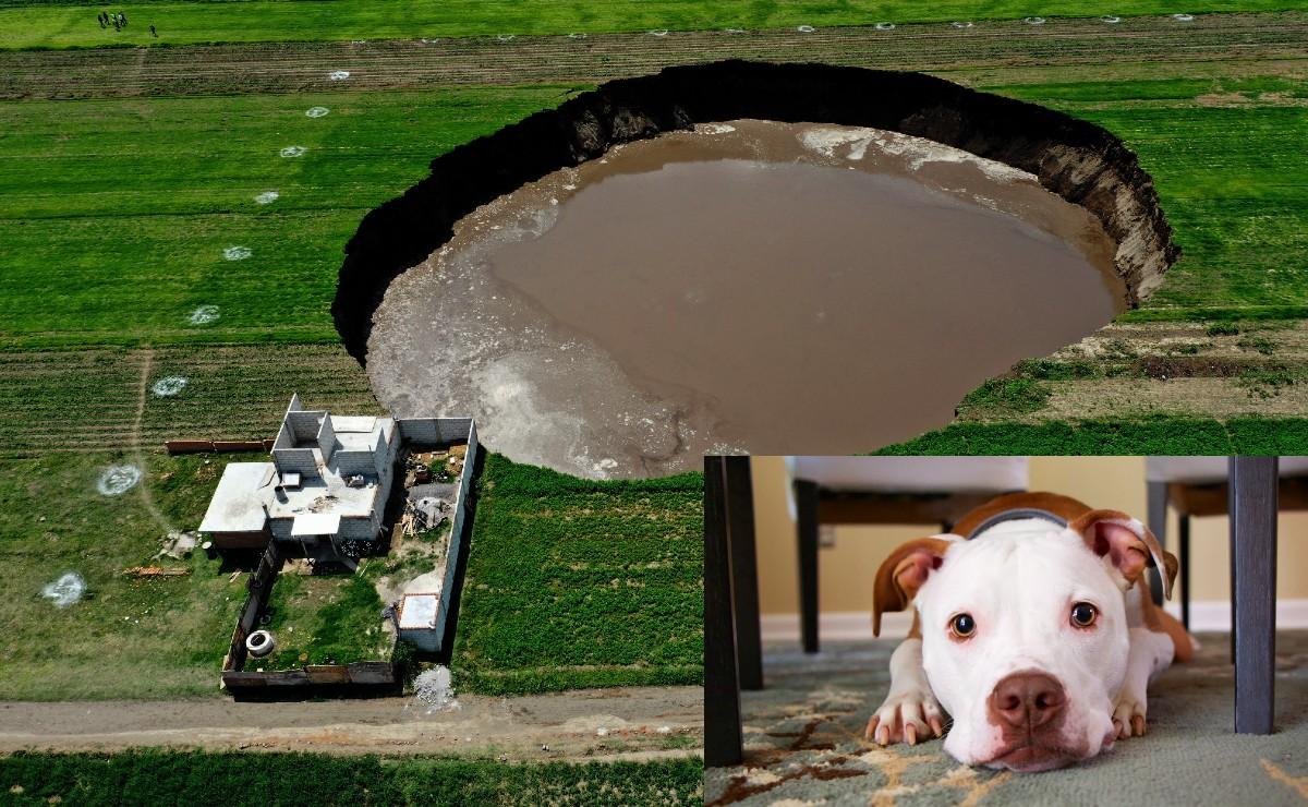 Cae cachorro Pitbull a socavón de Puebla; dueña dice que policías lo asustaron y se echó a correr