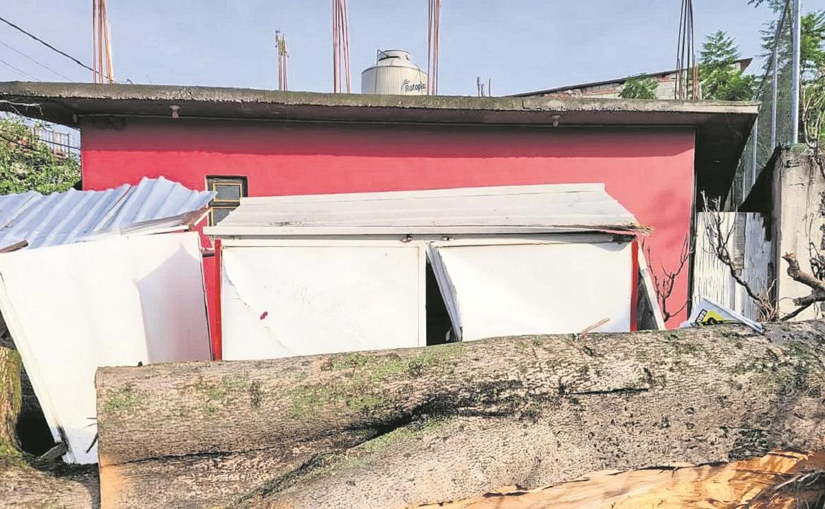 Árbol colpasa sobre un negocio de tacos de suadero en Morelos